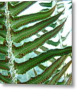Office Art Ferns Green Forest Fern Giclee Prints Baslee Troutman Metal Print