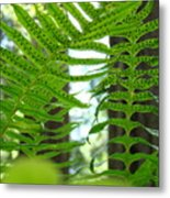 Office Art Ferns Redwood Forest Fern Giclee Prints Baslee Troutman Metal Print
