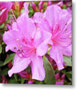 Office Art Pink Azalea Flower Garden 3 Giclee Art Prints Baslee Troutman Metal Print