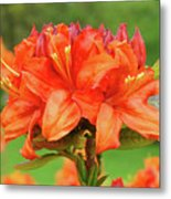 Office Art Prints Azaleas Botanical Landscape 11 Giclee Prints Baslee Troutman Metal Print