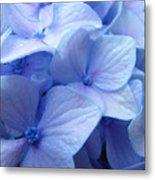 Office Art Prints Blue Hydrangea Flowers Giclee Baslee Troutman Metal Print