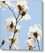 Office Art Prints Blue Sky White Magnolia Flowers 38 Giclee Prints Baslee Troutman Metal Print