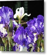 Office Art Prints Iris Flower Botanical Landscape 30 Giclee Prints Baslee Troutman Metal Print