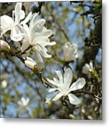 Office Art Prints Magnolia Tree Flowers Landscape 15 Giclee Prints Baslee Troutman Metal Print