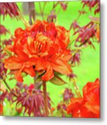 Office Art Prints Orange Azalea Flowers Landscape 13 Giclee Prints Baslee Troutman Metal Print