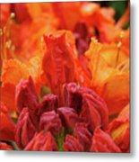 Office Art Prints Orange Azaleas Flowers 9 Giclee Prints Baslee Troutman Metal Print