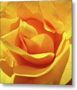 Office Art Prints Roses Orange Yellow Rose Flower 1 Giclee Prints Baslee Troutman Metal Print