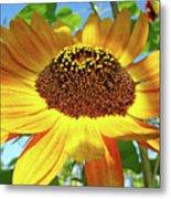 Office Art Prints Sunflowers Giclee Prints Sun Flower Baslee Troutman Metal Print