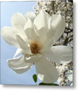 Office Art Prints White Magnolia Flower 66 Blue Sky Giclee Prints Baslee Troutman Metal Print