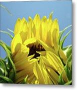 Office Art Sunflower Opening Summer Sun Flower Baslee Troutman Metal Print