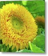 Office Art Sunflower Sun Flowers Giclee Baslee Troutman Metal Print