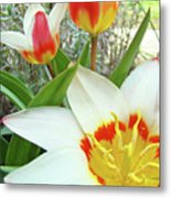 Office Art Tulips Tulip Flowers Giclee Art Prints Florals Baslee Troutman Metal Print