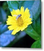Oh My A Fly  Metal Print