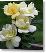 Oh So Pretty Roses Metal Print