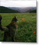 Oh What A Beautiful Day Metal Print