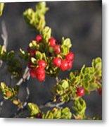 Ohelo Berries Metal Print