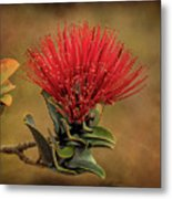 Ohia Lehua Flower Volcanos National Park Metal Print