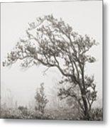 Ohia Lehua Tree Metal Print