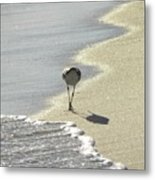 Looking For A Meal Metal Print