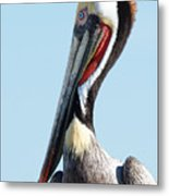 Ol' Blue Eyes Is Back -- Brown Pelican In Port San Luis, California Metal Print