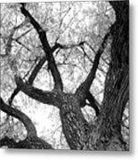 Old Cottonwood Tree Metal Print
