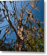 Old Cypress Metal Print