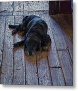 Old Dog Old Floor Metal Print