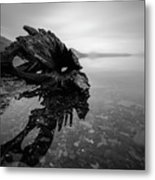 Old Driftwood Metal Print