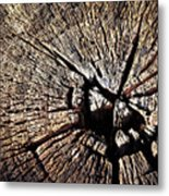 Old Dry Stump Metal Print