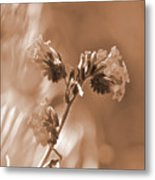 Old Fashioned Wild Flowers  Metal Print