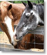 Old Friends Are The Best Friends Metal Print