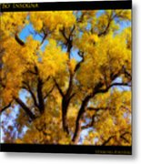 Old Giant  Autumn Cottonwood Orton Metal Print
