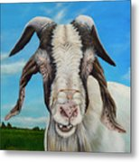 Old Goat - Painting By Cindy Chinn Metal Print