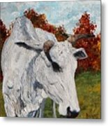 Old Grey Cow Metal Print