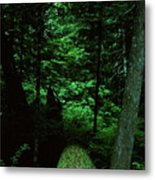Old Growth Forest At Lost Lake On Mount Hood Metal Print