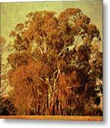 Old Gum Tree Metal Print