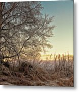 Old Harvester By The Birch Tree Metal Print