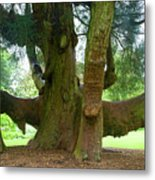 Old Huge Tree Metal Print