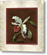 Old Masters Reimagined - Cattleya Orchid Metal Print