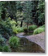 Old Mill Park In Mill Valley 2 Metal Print