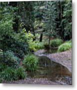 Old Mill Park In Mill Valley Metal Print