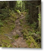 Old Mitchell Trail In Spruce-fir Forest Metal Print