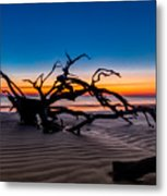 Old Oak New Day Metal Print by Debra and Dave Vanderlaan