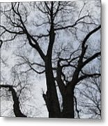Old Oak Overcast Metal Print
