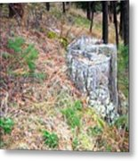 Old Pine Stump Metal Print