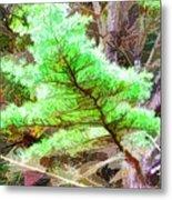 Old Pine Tree 1 Metal Print