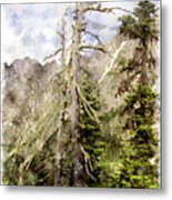 Old Pines Cascades Wc Metal Print