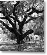 Old Plantation Tree Metal Print