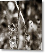 Old Poppies Metal Print