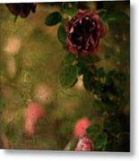 Old Roses Metal Print